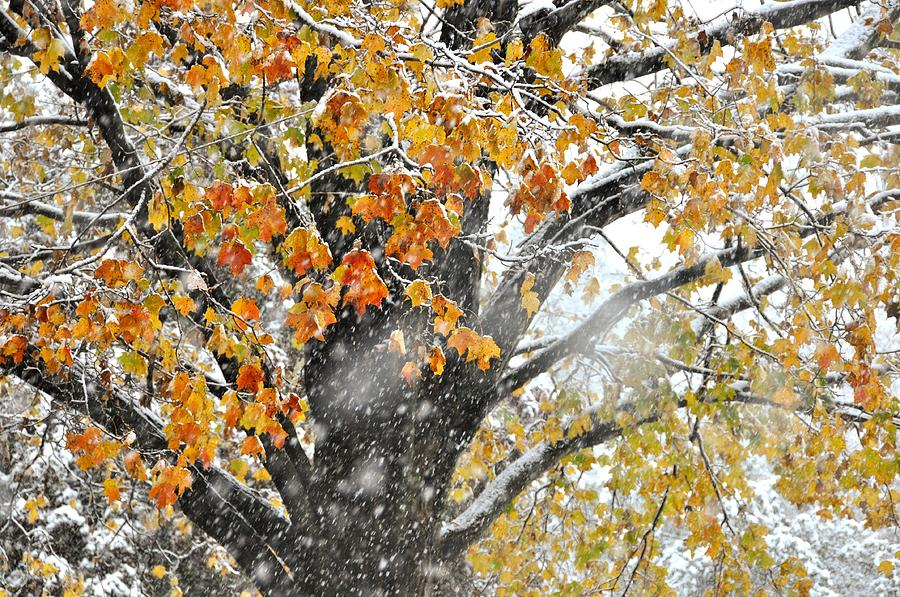 Winter Photograph - Winter Autumn Collide by JAMART Photography