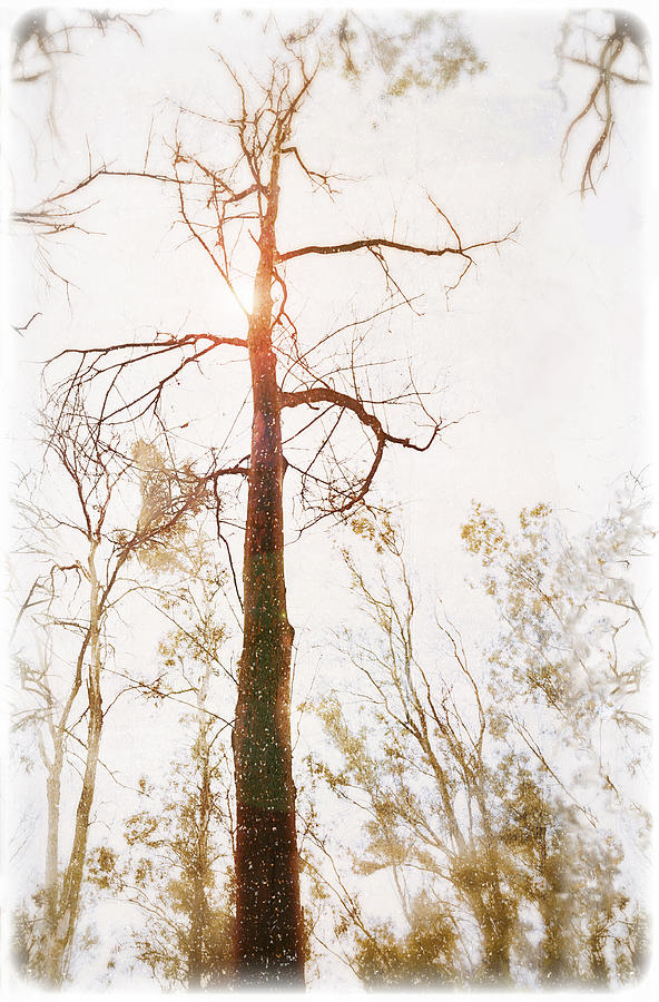 Winter Photograph - Winter In The Woodlands by Erica Horsley