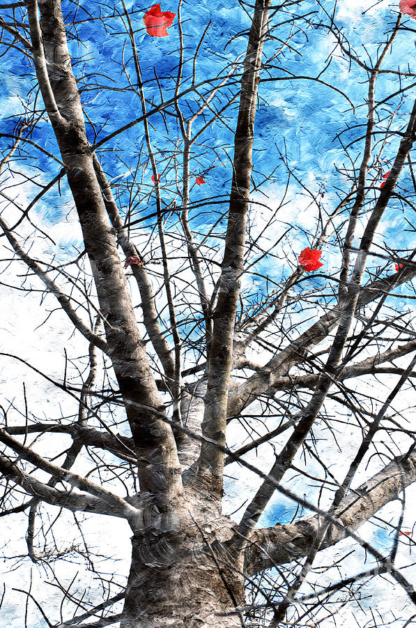 Tree Photograph - Winter Is Near by Andee Design