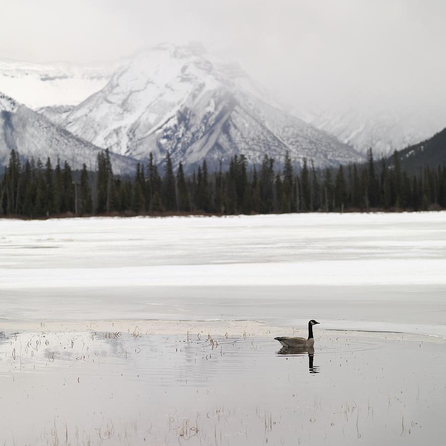 Animal Photograph - Winter Landscape, Banff National Park by Keith Levit
