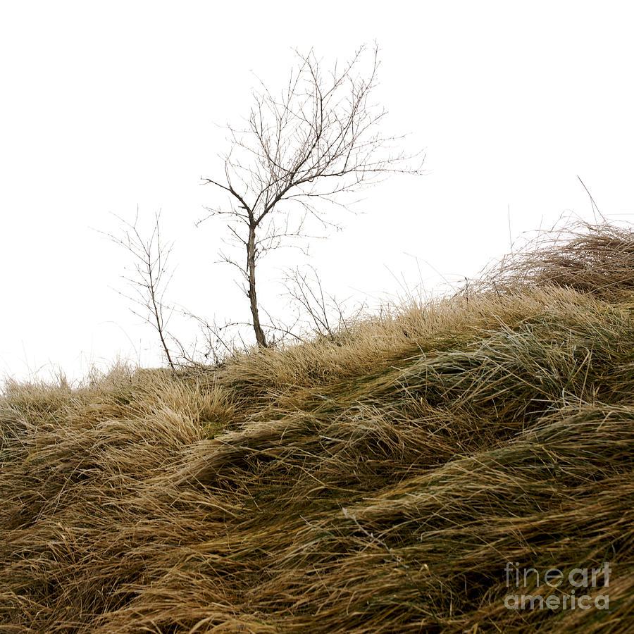 Wintry Photograph - Winter Landscape by Bernard Jaubert