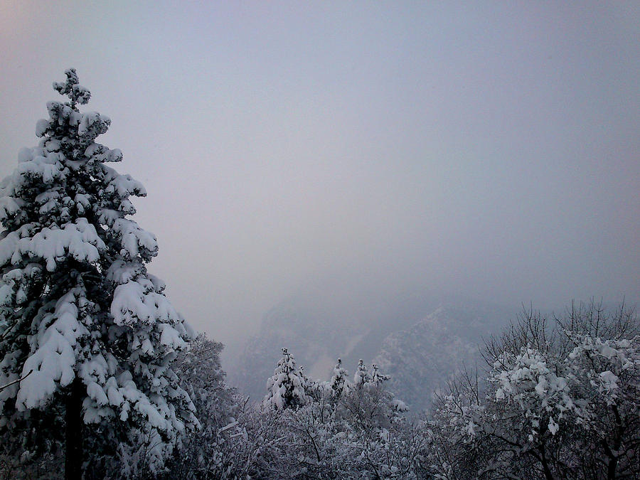 Winter Photograph - Winter by Lucy D