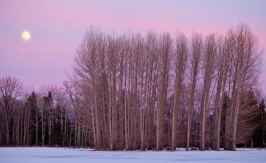 Winter Moon Photograph by Marie-Dominique Verdier