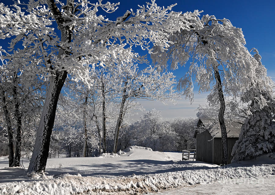 Winter Morning Photograph - Winter Morning by Lois Bryan
