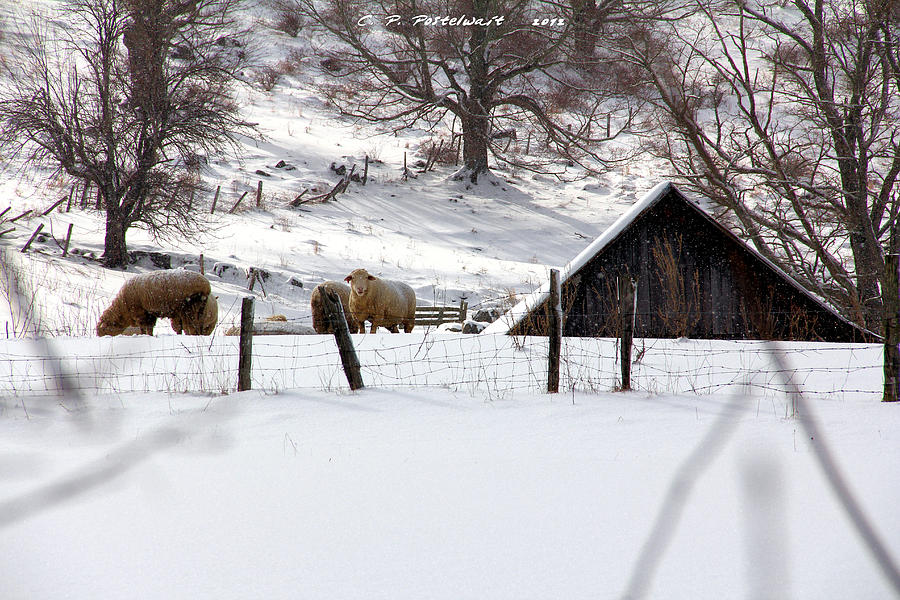 Farms Photograph - Winter On The Farm by Carolyn Postelwait
