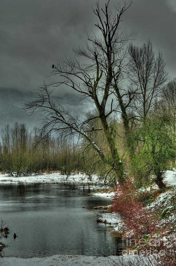 Snow Photograph - Winter On The Nicomen Slough by Rod Wiens