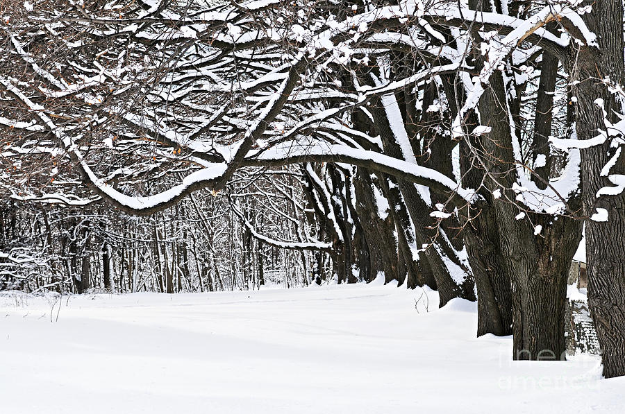 Winter Photograph - Winter Park With Snow Covered Trees by Elena Elisseeva