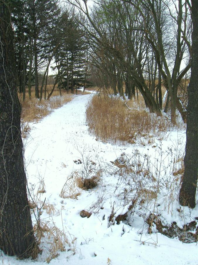 Winter Path Photograph by Todd Sherlock