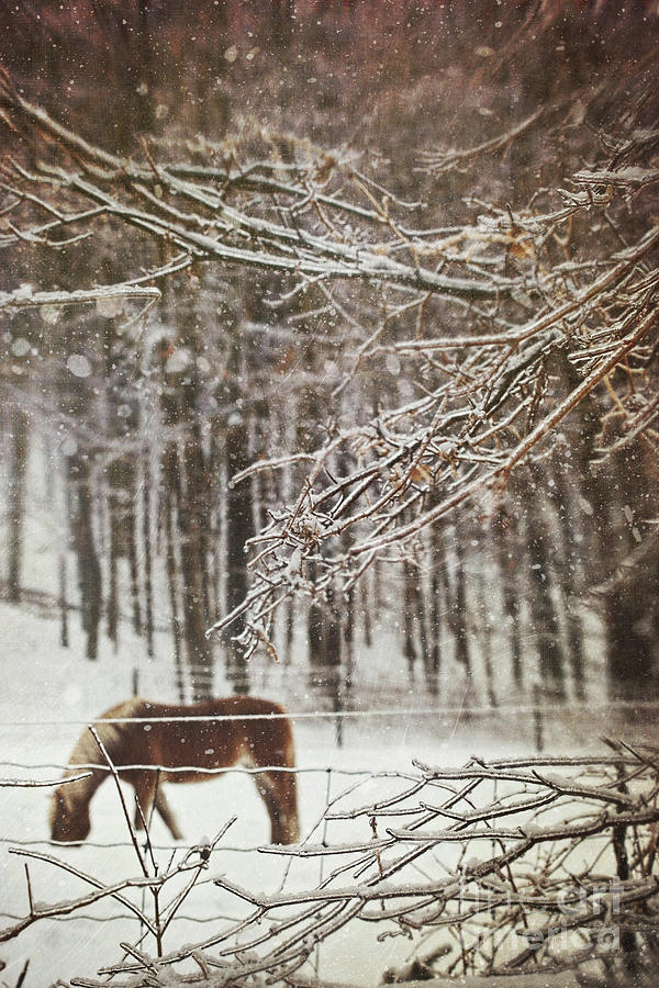 Atmosphere Photograph - Winter Scene With Horse Grazing In Wooded Pasture by Sandra Cunningham