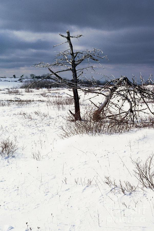 Ice Photograph - Winter Shenandoah National Park by Thomas R Fletcher