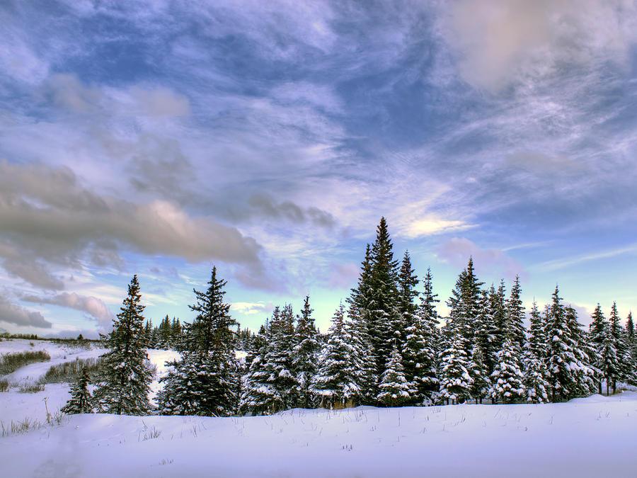 Winter Sky Photograph by Michele Cornelius