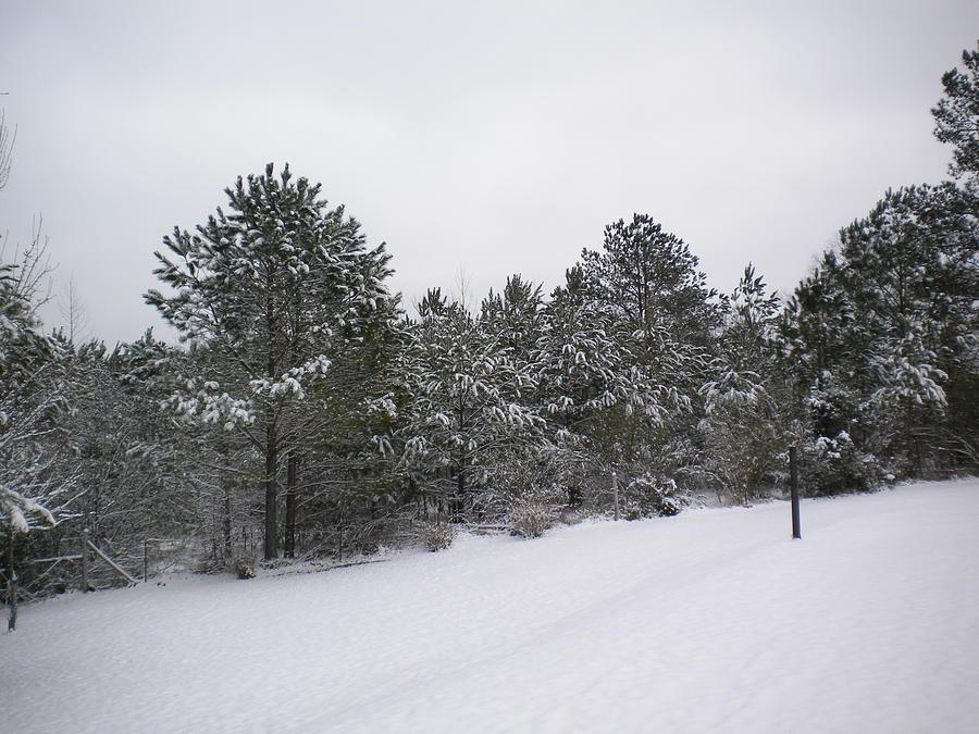 Winter Scene Photograph - Winter Slope by Tessa Priddy