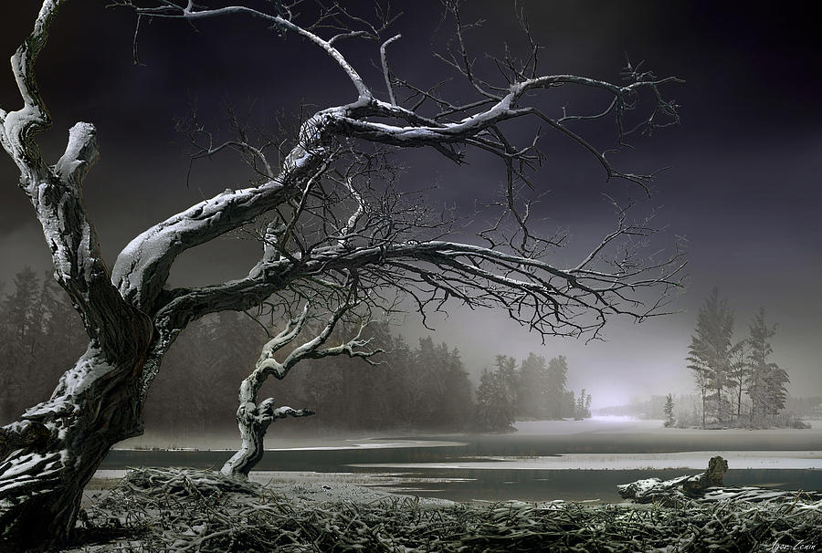 Trees Photograph - Winter Thaw by Igor Zenin