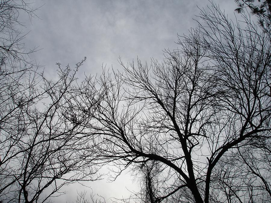 Branches Photograph - Winter Tree II by Suzanne Fenster
