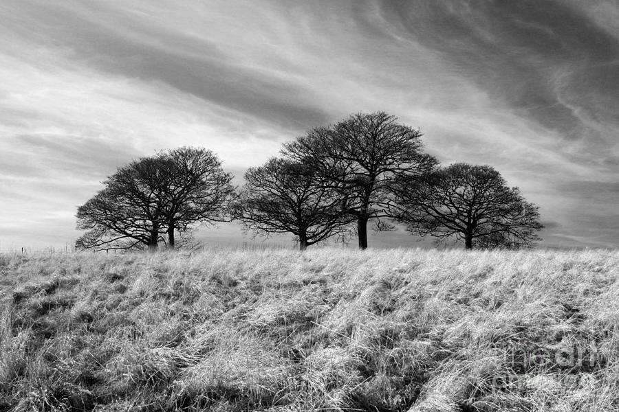 Winter Trees Bw Photograph