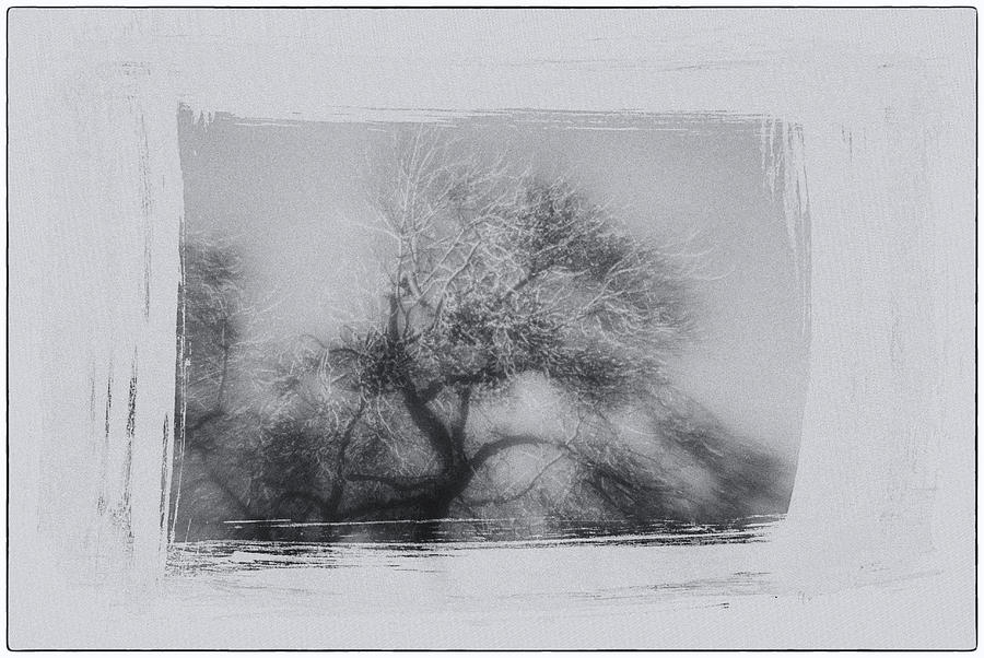 Winter Photograph - Winter Trees by David Ridley