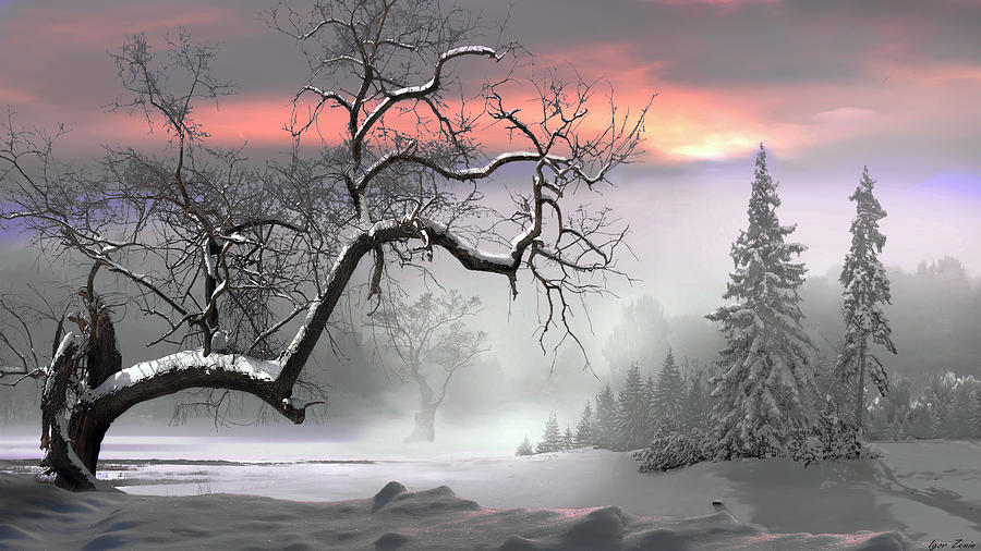 Tree Photograph - Winter Trees by Igor Zenin