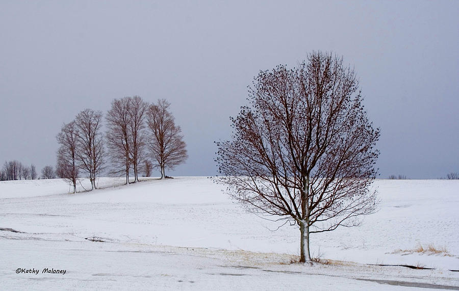Winter Trees by Kathy Maloney