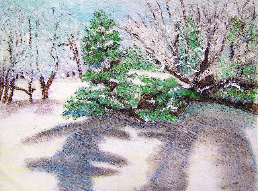 Winter Trees Drawing - Winter Trees by Katina Cote