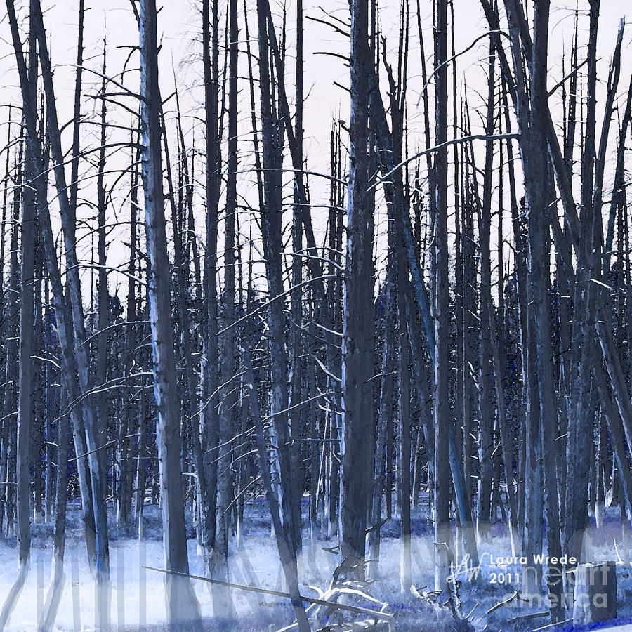 Nature Digital Art - Winter Trees by Artist and Photographer Laura Wrede