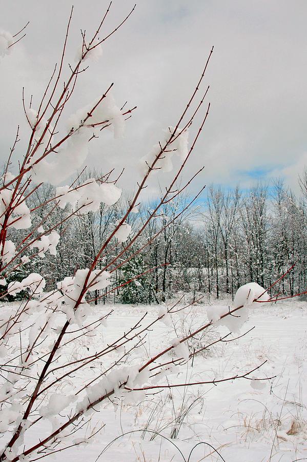 Winter Scene Photograph - Winter Woods by Joann Vitali