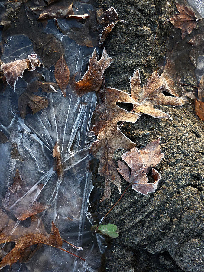 Winter Photograph - Winters Grasp by Pamela Turner
