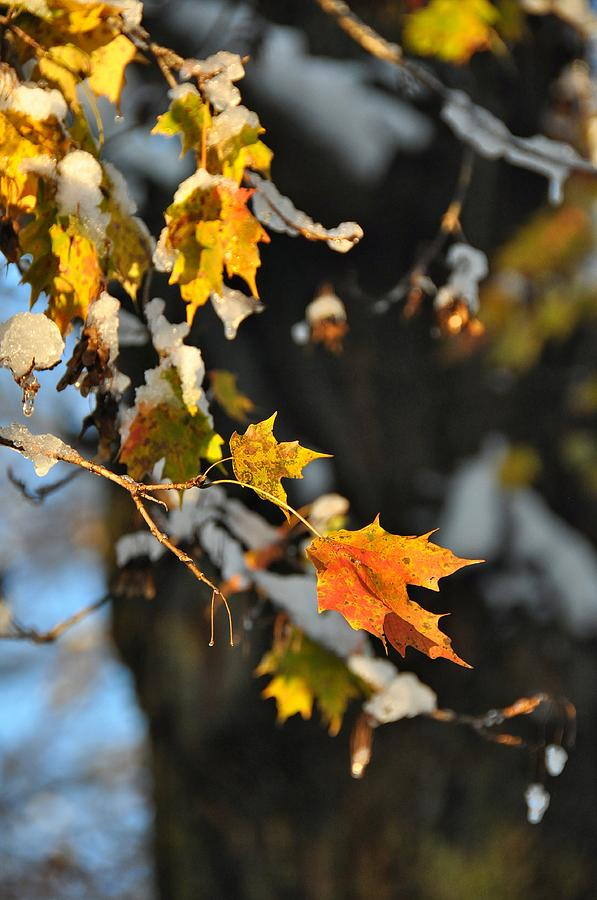 Autumn Photograph - Wintery Pigment by JAMART Photography