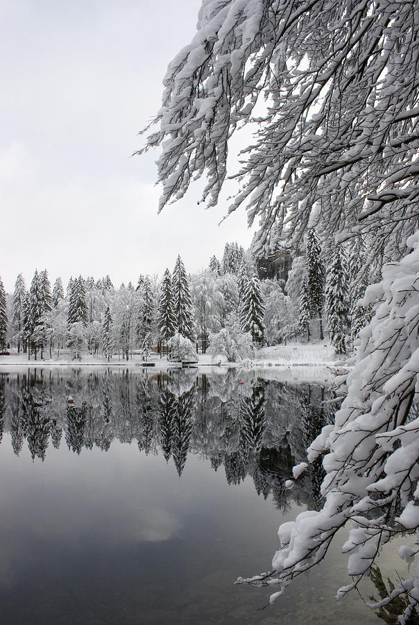 Reflections Photograph - Wintery Reflections by Ian Middleton