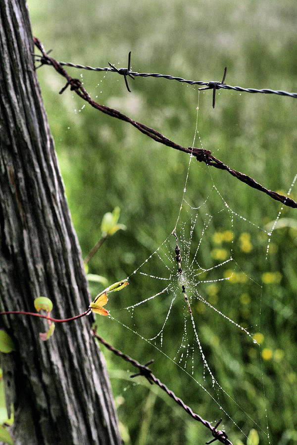 Spiderweb Photograph - Wired by JC Findley