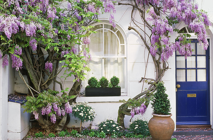 Horizontal Photograph - Wisteria Climbing Up Wall Of House With Window Box by Linda Burgess