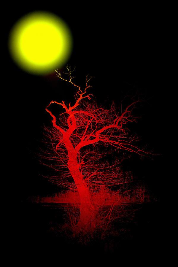 Witchwood Digital Art by Steve K