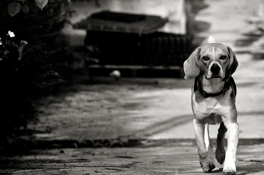 Dog Photograph - With No Fear by Laura Melis