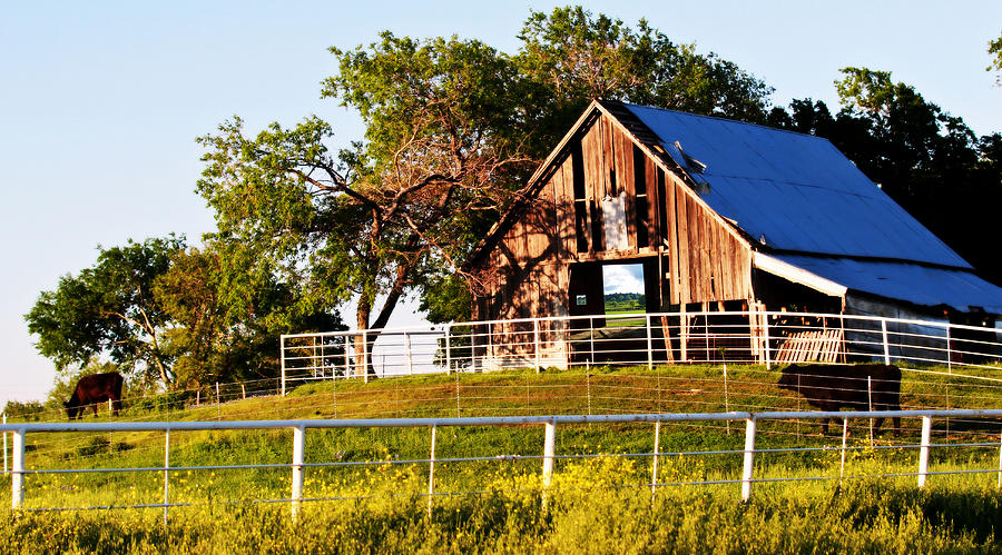 Barn Photograph - Withered But Worthy by Elizabeth Hart