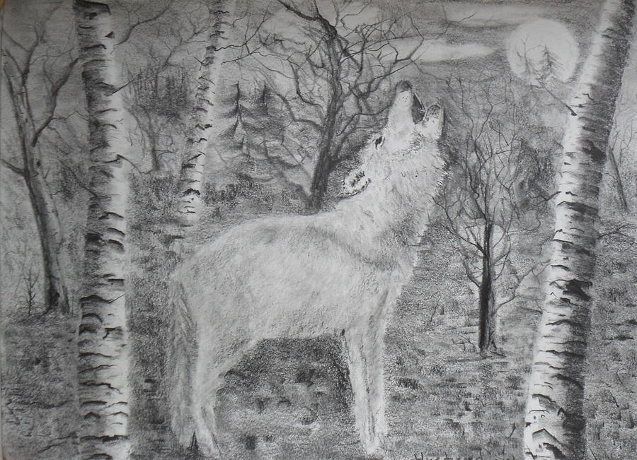 Landscape Drawing - Wolf by Brian Hustead