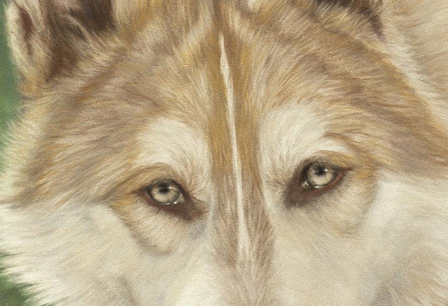 Wolf Pastel - Wolf Eyes by Teresa LeClerc