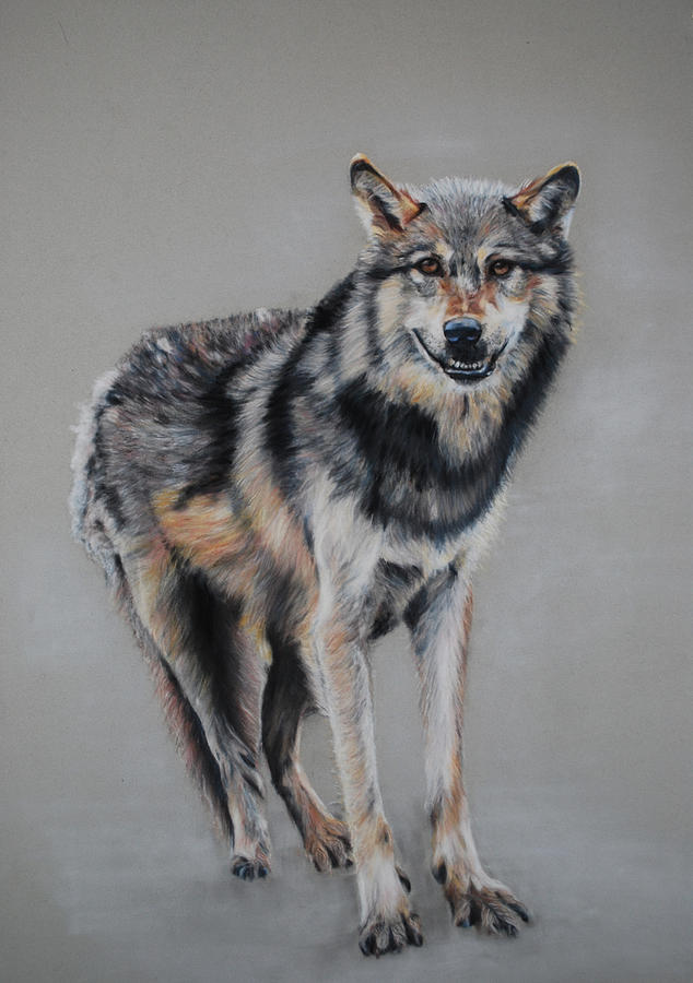 Animal Painting - Wolf Standing by Tanya Patey