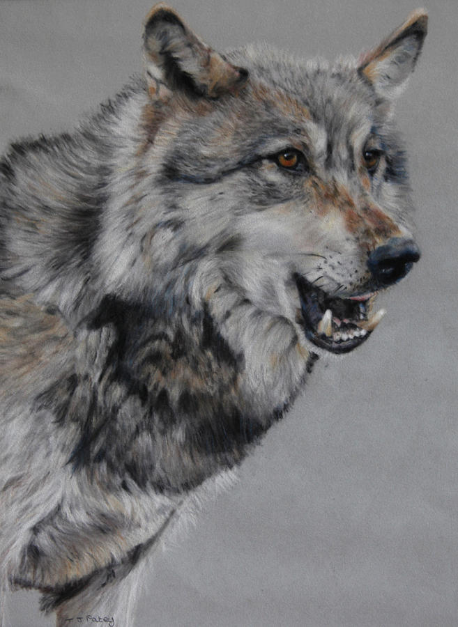 Wolf Painting - Wolf by Tanya Patey