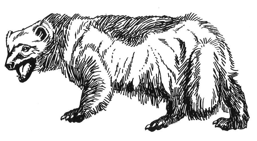Animals Painting - Wolverine by David Burkart