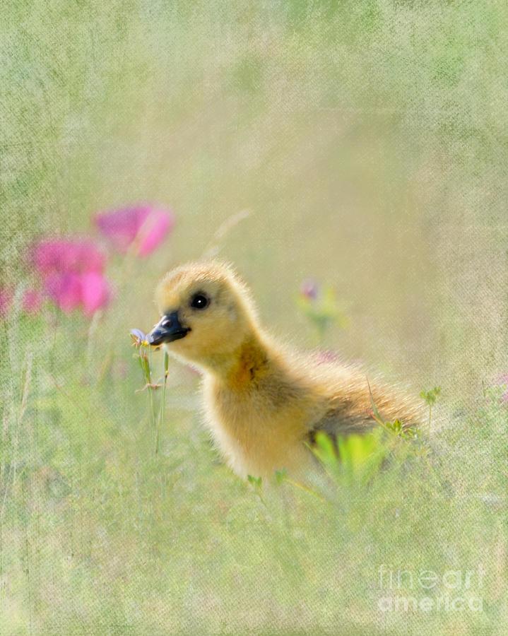 Animal Photograph - Wonderful New World-2 by Betty LaRue