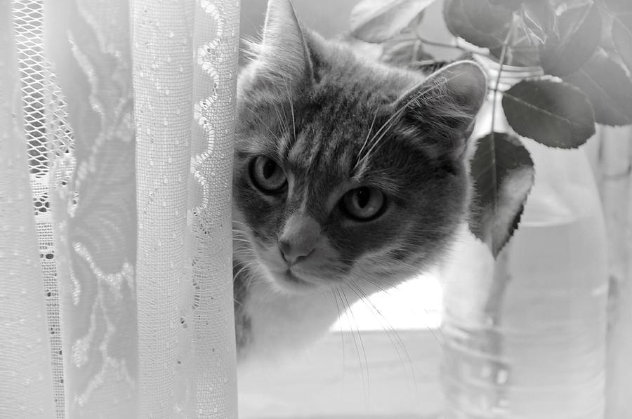 Cat Photograph - Wondering. Kitty Time by Jenny Rainbow