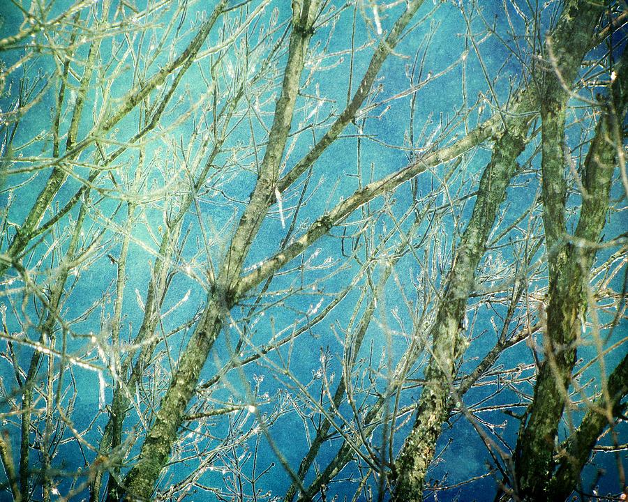 Landscape Photograph - Wonderland by Amy Tyler