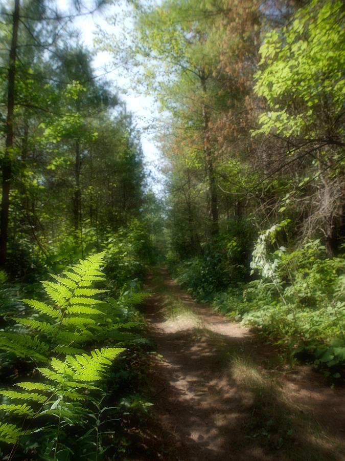 Path Photograph - Wondrous Path by Yves Pelletier