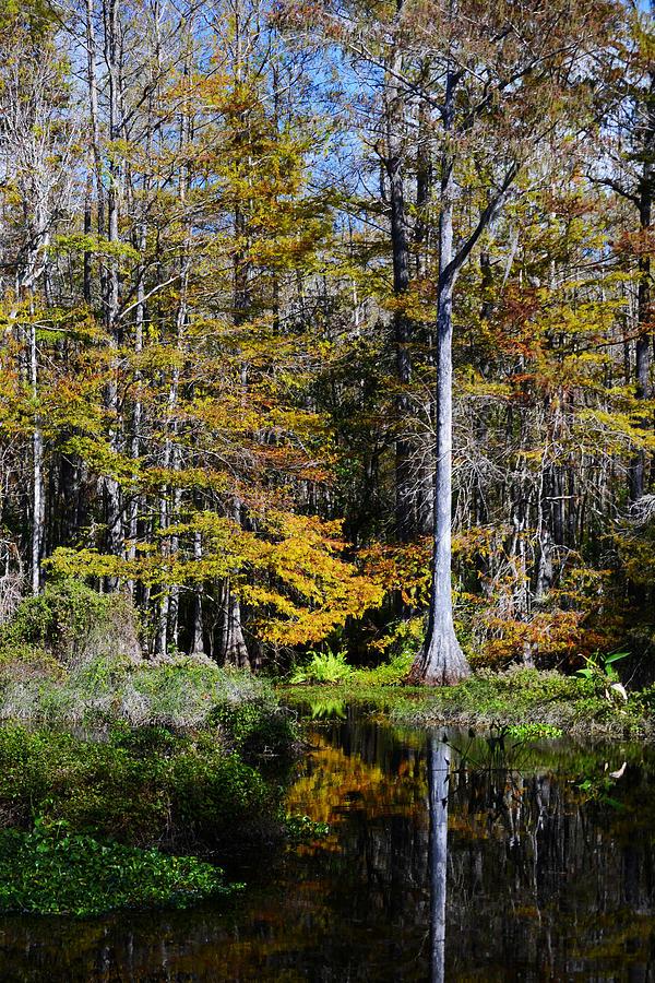 Nature Photograph - Wood Duck Pond by Melanie Moraga