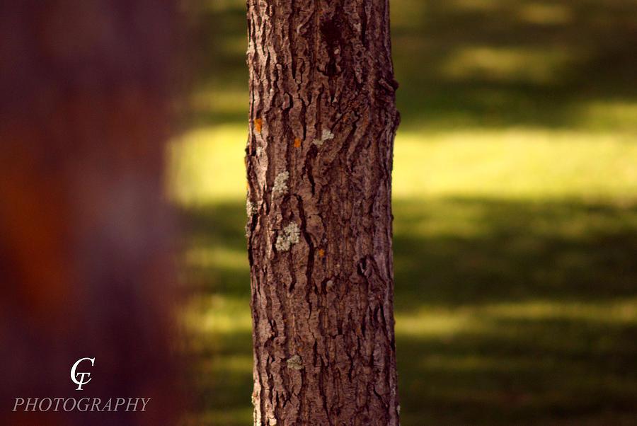Nature Photograph - Wood Looking At Me by Carolina Artemis Tamvaki