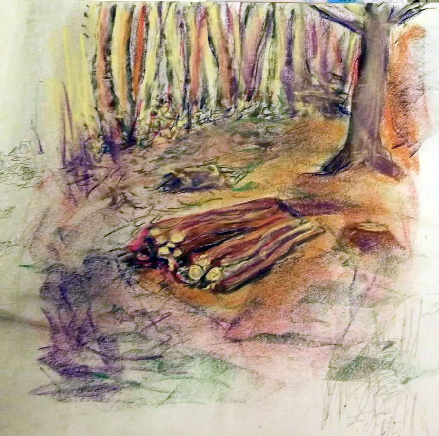 Landscape Drawing - Wood Pile by Peter Edward Green