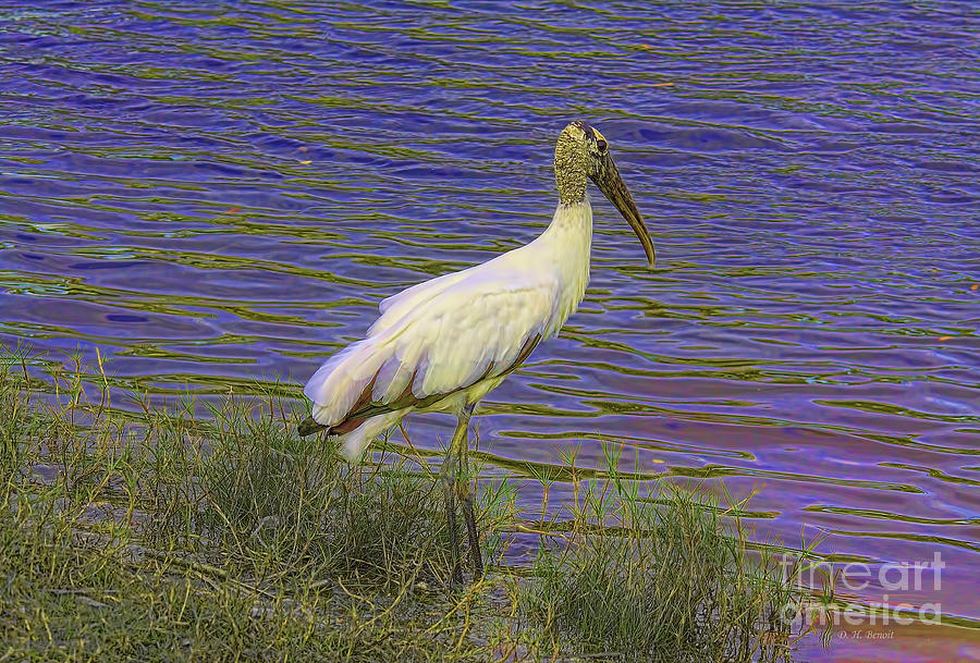 Wildlife Photograph - Wood Stork By The Pond by Deborah Benoit