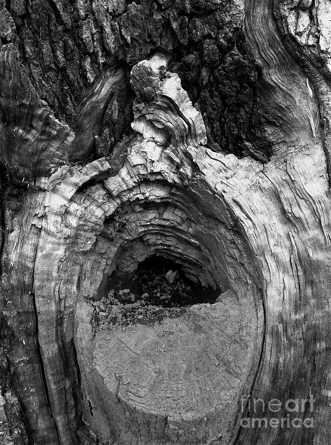 Wood You Smile  Photograph by Trish Hale
