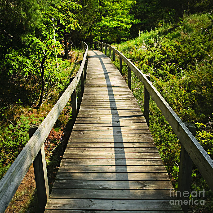 Wooden walkway through forest Photograph by Elena Elisseeva