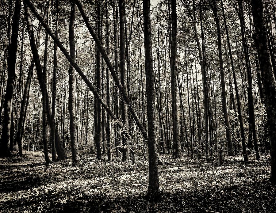 Woodland Photograph - Woodland by Lourry Legarde