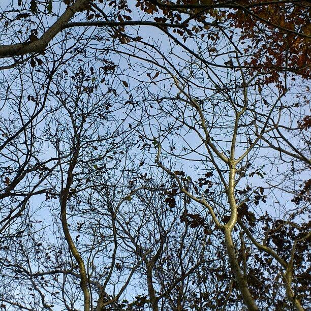 Countryside Photograph - #woodland #walk In #barnstaple #devon - by Robin Beer